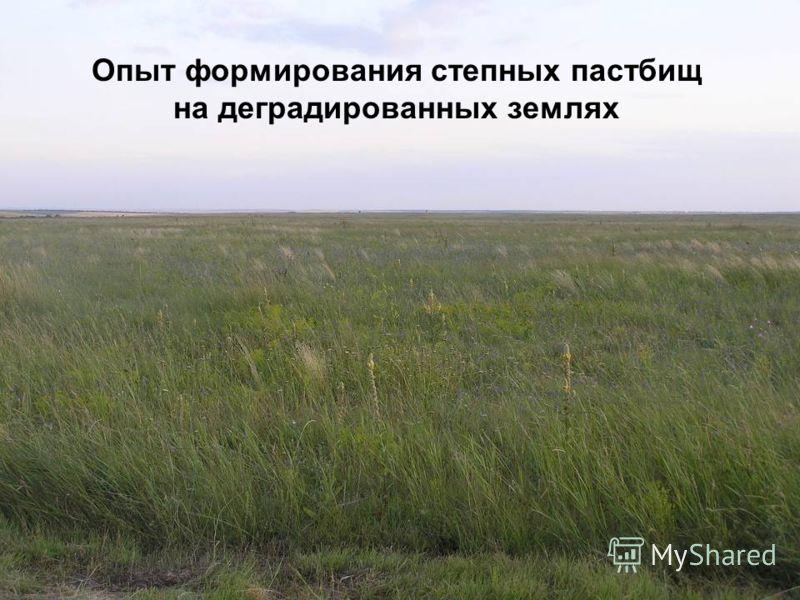 Опыт формирования степных пастбищ на деградированных землях