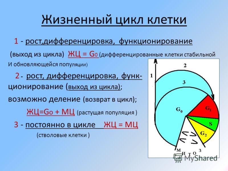 Жизненный цикл клетки 1 - рост,дифференцировка, функционирование (выход из цикла) ЖЦ = G 0 (дифференцированные клетки стабильной И обновляющейся попу ляции) 2 - рост, дифференцировка, функ- ционирование ( выход из цикла); возможно деление (возврат в