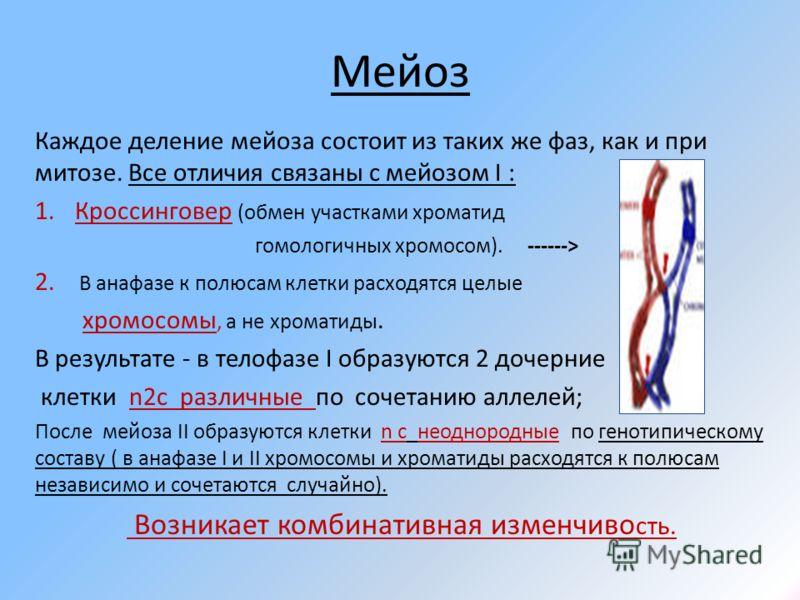 Мейоз Каждое деление мейоза состоит из таких же фаз, как и при митозе. Все отличия связаны с мейозом I : 1.Кроссинговер (обмен участками хроматид гомологичных хромосом). ------> 2. В анафазе к полюсам клетки расходятся целые хромосомы, а не хроматиды