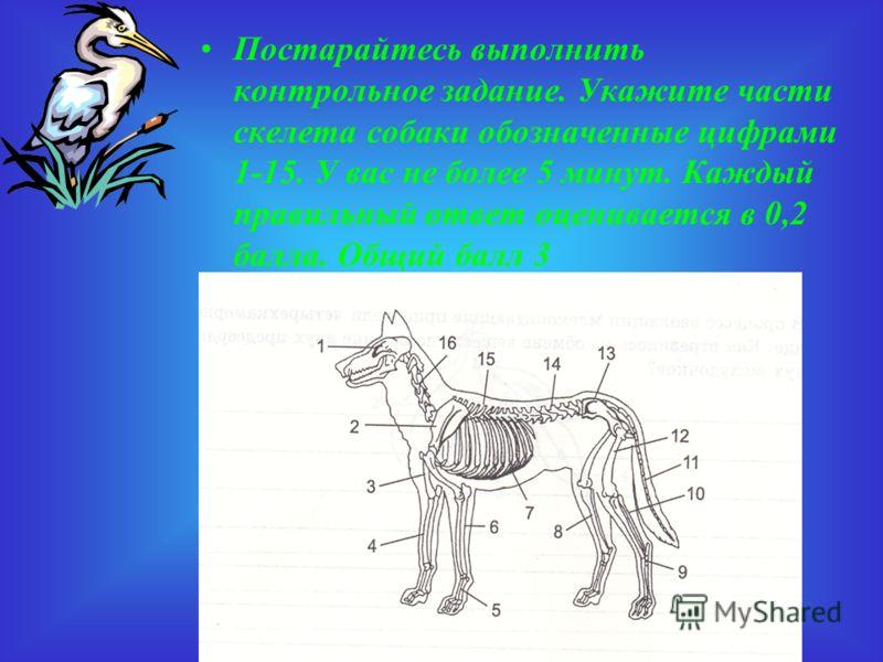 Ответ В плечевом поясе млекопитающих вороньи кости утратили самостоятельность и приросли к лопаткам.