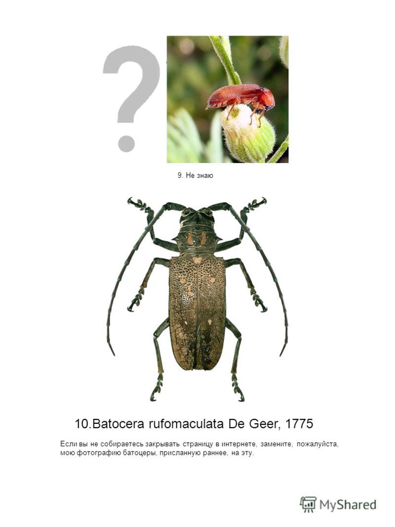 9. Не знаю 10.Batocera rufomaculata De Geer, 1775 Если вы не собираетесь закрывать страницу в интернете, замените, пожалуйста, мою фотографию батоцеры, присланную раннее, на эту.