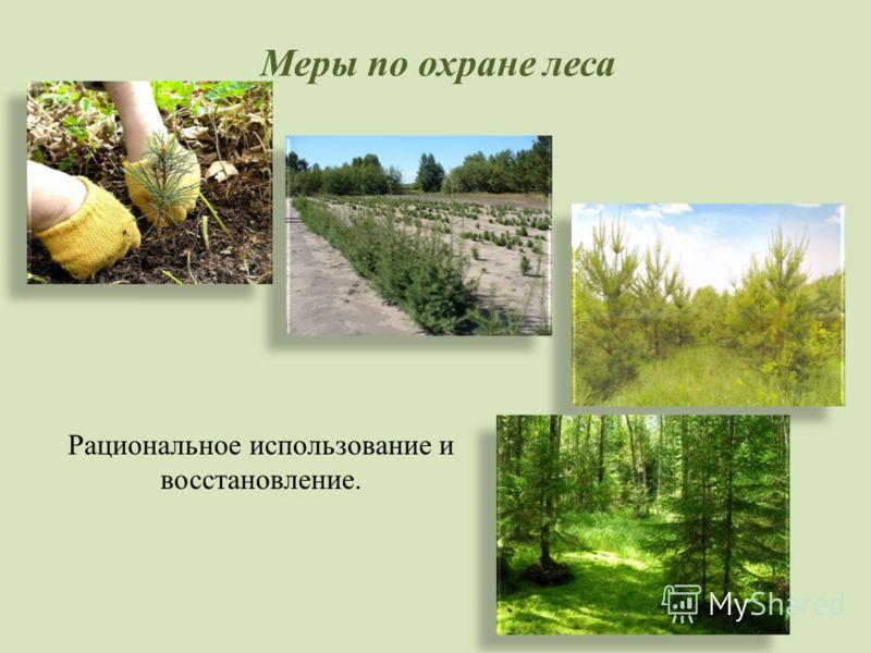 Меры по охране леса Рациональное использование и восстановление.