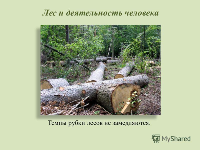 Лес и деятельность человека Темпы рубки лесов не замедляются.