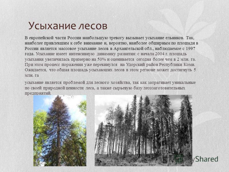 Усыхание лесов В европейской части России наибольшую тревогу вызывает усыхание ельников. Так, наиболее привлекшим к себе внимание и, вероятно, наиболее обширным по площади в России является массовое усыхание лесов в Архангельской обл., наблюдаемое с