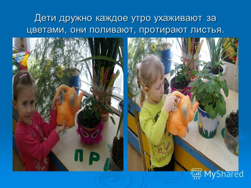 Дети дружно каждое утро ухаживают за цветами, они поливают, протирают листья.