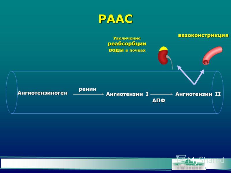 РААС Ангиотензиноген Ангиотензин I Ангиотензин II ренин АПФ вазоконстрикция Увеличение реабсорбции воды в почках