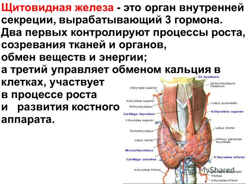 Щитовидная железа - это орган внутренней секреции, вырабатывающий 3 гормона. Два первых контролируют процессы роста, созревания тканей и органов, обмен веществ и энергии; а третий управляет обменом кальция в клетках, участвует в процессе роста и разв