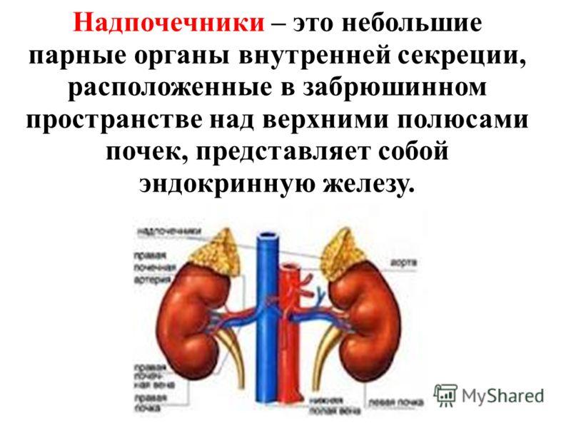 Надпочечники – это небольшие парные органы внутренней секреции, расположенные в забрюшинном пространстве над верхними полюсами почек, представляет собой эндокринную железу.