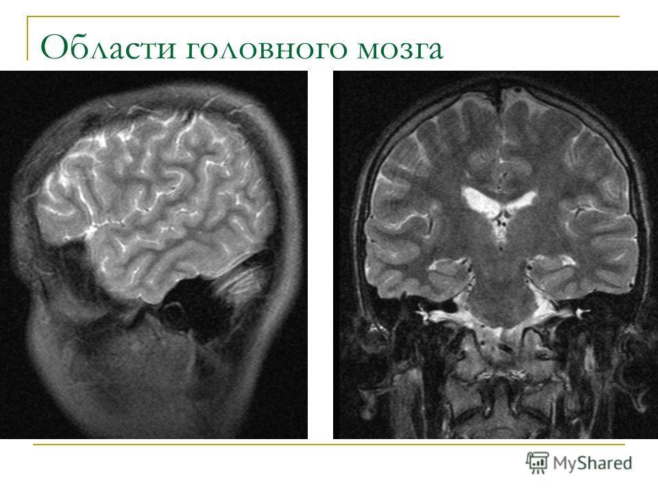 Области головного мозга