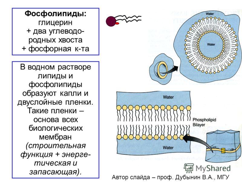 Фосфолипиды: глицерин + два углеводо- родных хвоста + фосфорная к-та В водном растворе липиды и фосфолипиды образуют капли и двуслойные пленки. Такие пленки – основа всех биологических мембран (строительная функция + энерге- тическая и запасающая). А