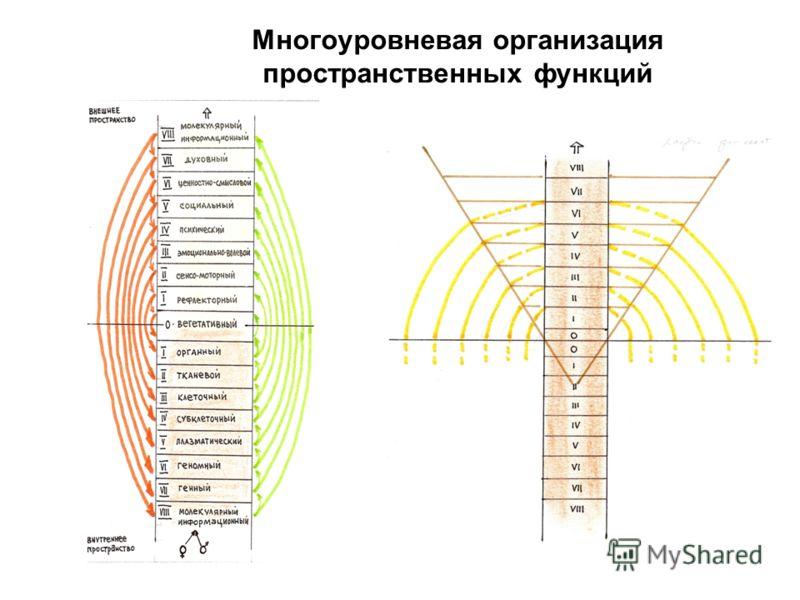 Многоуровневая организация пространственных функций