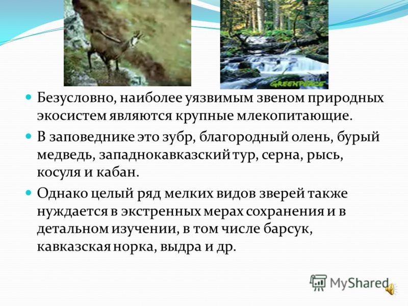 Представительство видов млекопитающих заповедника по семействам распределяется следующим образом: ежовые (1), кротовые (2), землеройковые (6), подковоносые летучие мыши (3), гладконосые летучие мыши (20), зайцевые (1), беличьи (1), соневые (2), тушка