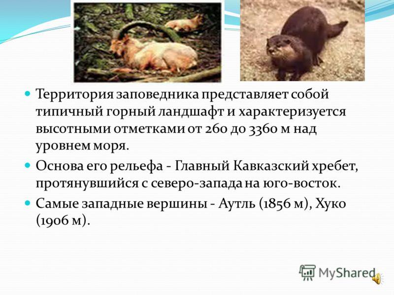 Кавказский заповедник - богатейшая сокровищница биоразнообразия, не имеющая аналогов в России. Он имеет международное эталонное значение, как участок нетронутой природы, сохранивший первозданные ландшафты с уникальной флорой и фауной. Не случайно в 1