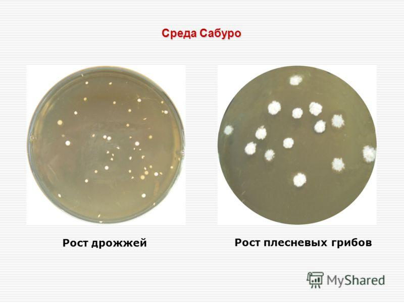 Среда Сабуро Рост дрожжей Рост плесневых грибов