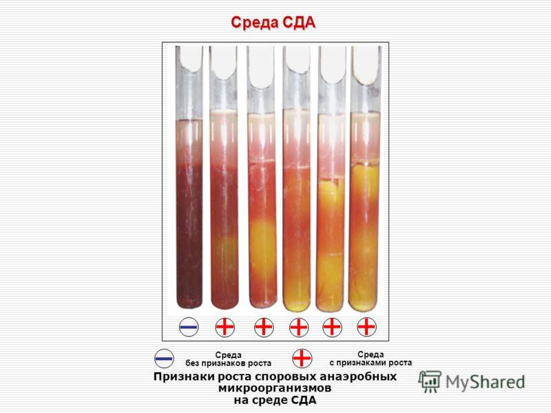 Среда СДА Cреда без признаков роста Среда с признаками роста Признаки роста споровых анаэробных микроорганизмов на среде СДА