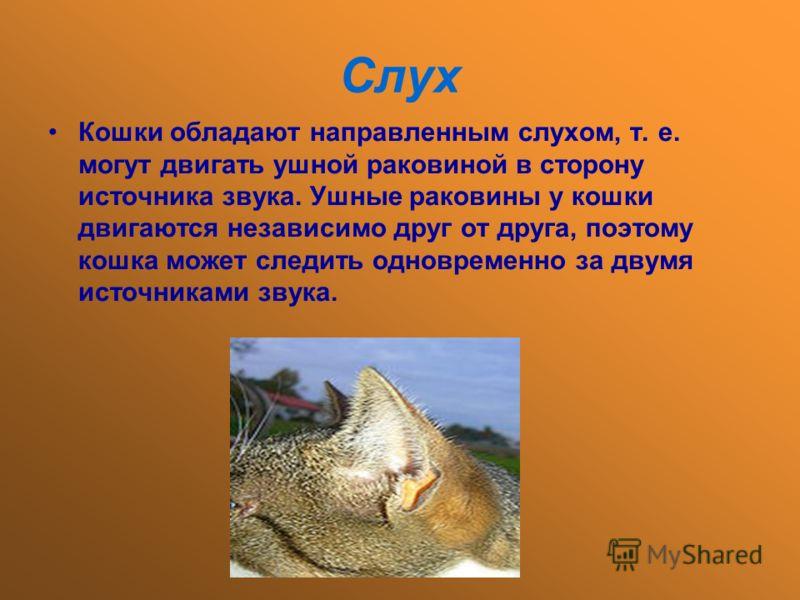 Слух Кошки обладают направленным слухом, т. е. могут двигать ушной раковиной в сторону источника звука. Ушные раковины у кошки двигаются независимо друг от друга, поэтому кошка может следить одновременно за двумя источниками звука.