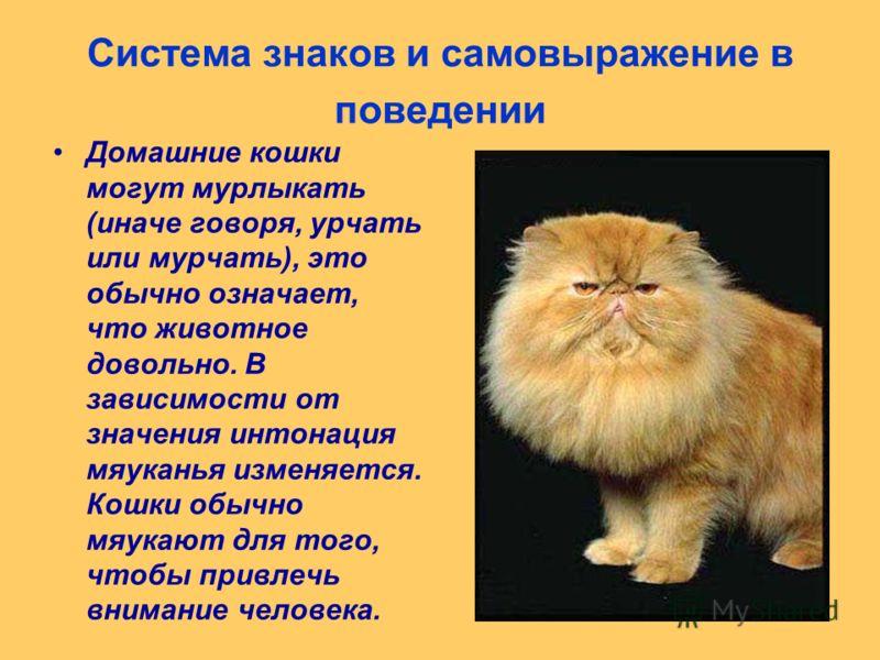 Система знаков и самовыражение в поведении Домашние кошки могут мурлыкать (иначе говоря, урчать или мурчать), это обычно означает, что животное довольно. В зависимости от значения интонация мяуканья изменяется. Кошки обычно мяукают для того, чтобы пр