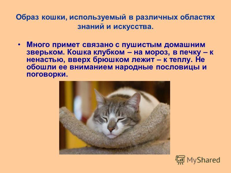 Образ кошки, используемый в различных областях знаний и искусства. Много примет связано с пушистым домашним зверьком. Кошка клубком – на мороз, в печку – к ненастью, вверх брюшком лежит – к теплу. Не обошли ее вниманием народные пословицы и поговорки