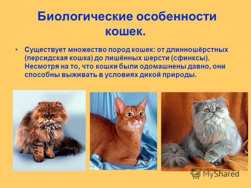 Биологические особенности кошек. Существует множество пород кошек: от длинношёрстных (персидская кошка) до лишённых шерсти (сфинксы). Несмотря на то, что кошки были одомашнены давно, они способны выживать в условиях дикой природы.