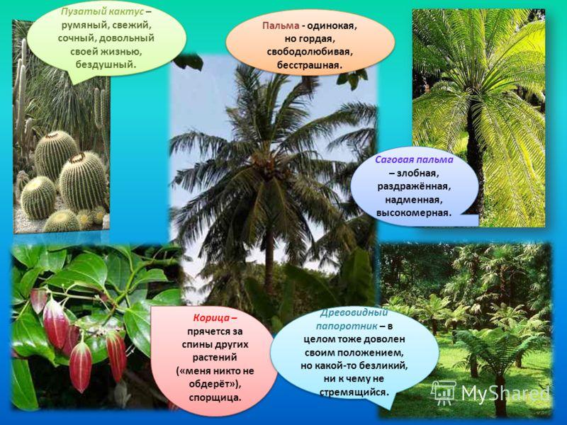 Пузатый кактус – румяный, свежий, сочный, довольный своей жизнью, бездушный. Саговая пальма – злобная, раздражённая, надменная, высокомерная. Корица – прячется за спины других растений («меня никто не обдерёт»), спорщица. Древовидный папоротник – в ц