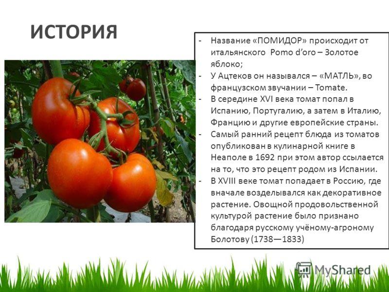Реферат на тему томат 1860