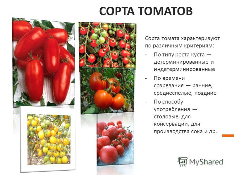 СОРТА ТОМАТОВ Сорта томата характеризуют по различным критериям: -По типу роста куста детерминированные и индетерминированные -По времени созревания ранние, среднеспелые, поздние -По способу употребления столовые, для консервации, для производства со