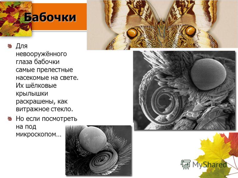 Бабочки Бабочки Для невооружённого глаза бабочки самые прелестные насекомые на свете. Их шёлковые крылышки раскрашены, как витражное стекло. Но если посмотреть на под микроскопом…