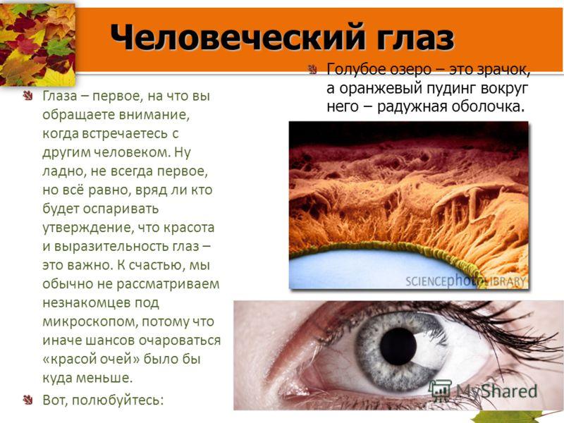 Человеческий глаз Глаза – первое, на что вы обращаете внимание, когда встречаетесь с другим человеком. Ну ладно, не всегда первое, но всё равно, вряд ли кто будет оспаривать утверждение, что красота и выразительность глаз – это важно. К счастью, мы о
