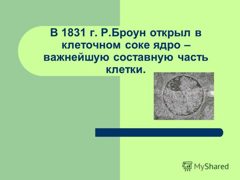 В 1831 г. Р.Броун открыл в клеточном соке ядро – важнейшую составную часть клетки.