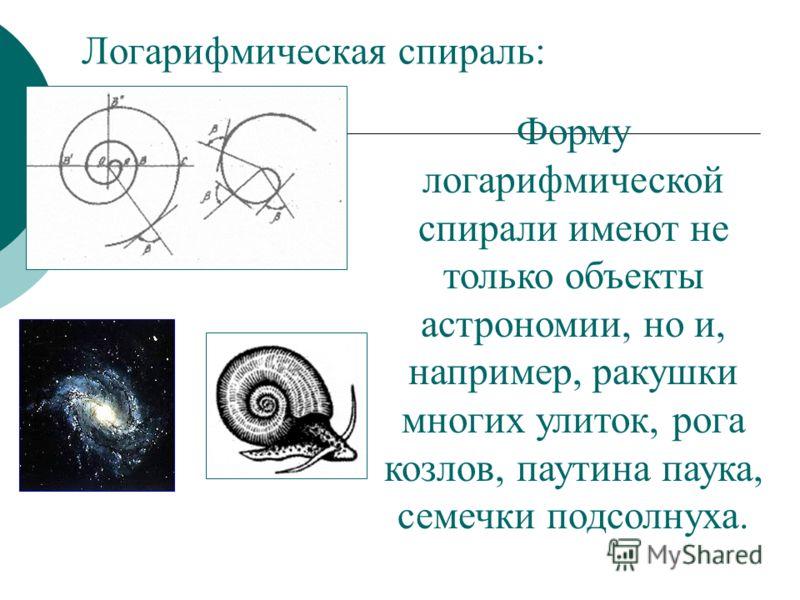Логарифмическая спираль: Форму логарифмической спирали имеют не только объекты астрономии, но и, например, ракушки многих улиток, рога козлов, паутина паука, семечки подсолнуха.