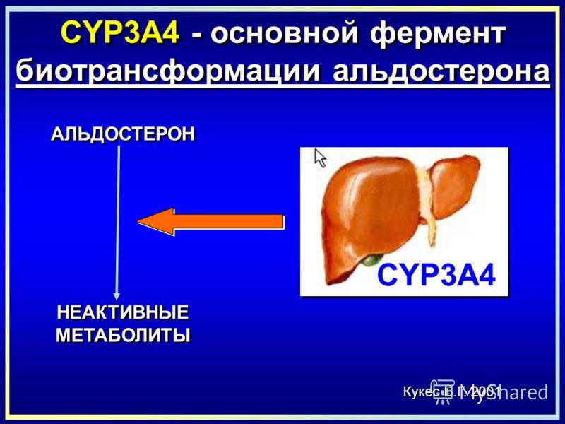 CYP3A4 - основной фермент биотрансформации альдостерона Кукес В.Г. 2001 АЛЬДОСТЕРОН НЕАКТИВНЫЕ МЕТАБОЛИТЫ НЕАКТИВНЫЕ МЕТАБОЛИТЫ CYP3A4
