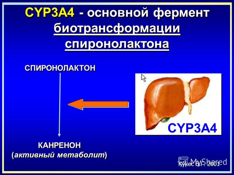 Кукес В.Г. 2001 CYP3A4 - основной фермент биотрансформации спиронолактона СПИРОНОЛАКТОН КАНРЕНОН (активный метаболит) КАНРЕНОН (активный метаболит) CYP3A4