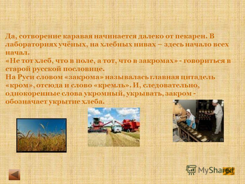 Да, сотворение каравая начинается далеко от пекарен. В лабораториях учёных, на хлебных нивах – здесь начало всех начал. «Не тот хлеб, что в поле, а тот, что в закромах» - говориться в старой русской пословице. На Руси словом «закрома» называлась глав