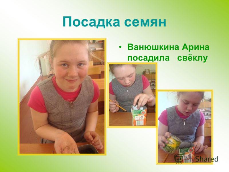 Посадка семян Ванюшкина Арина посадила свёклу