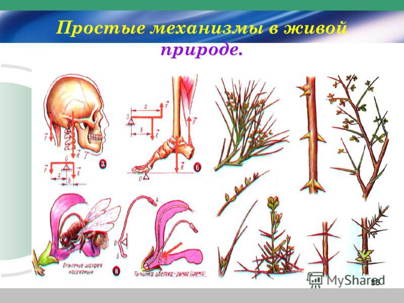 Простые механизмы в живой природе. 36