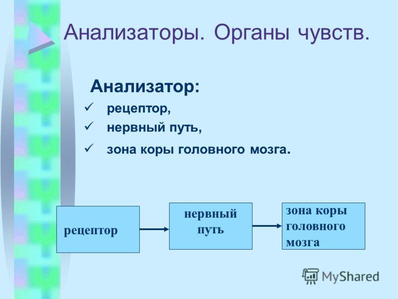 Анализаторы. Органы чувств. Анализатор: рецептор, нервный путь, зона коры головного мозга. рецептор нервный путь зона коры головного мозга