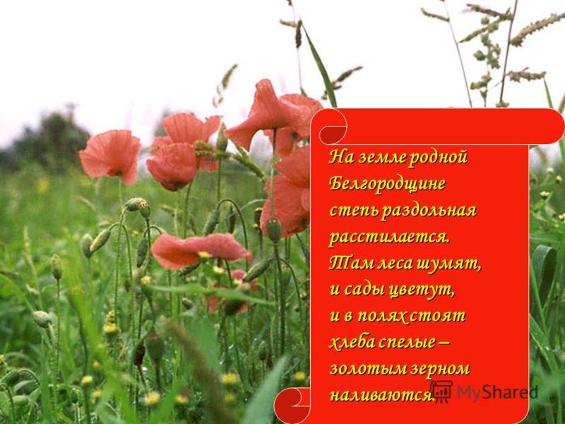 На земле родной Белгородщине степь раздольная расстилается. Там леса шумят, и сады цветут, и в полях стоят хлеба спелые – золотым зерном наливаются наливаются.