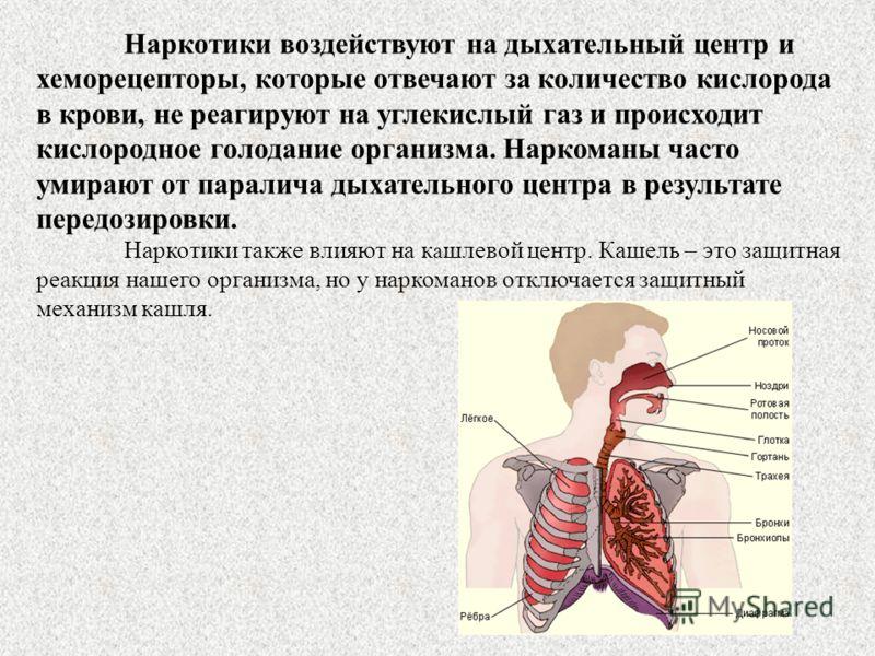 Наркотики воздействуют на дыхательный центр и хеморецепторы, которые отвечают за количество кислорода в крови, не реагируют на углекислый газ и происходит кислородное голодание организма. Наркоманы часто умирают от паралича дыхательного центра в резу
