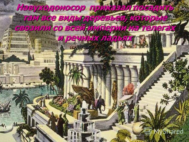 Навуходоносор приказал посадить там все виды деревьев, которые свозили со всей империи на телегах и речных ладьях