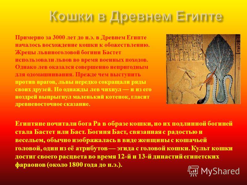 Примерно за 3000 лет до н. э. в Древнем Египте началось восхождение кошки к обожествлению. Жрецы львиноголовой богини Бастет использовали львов во время военных походов. Однако лев оказался совершенно непригодным для одомашнивания. Прежде чем выступи