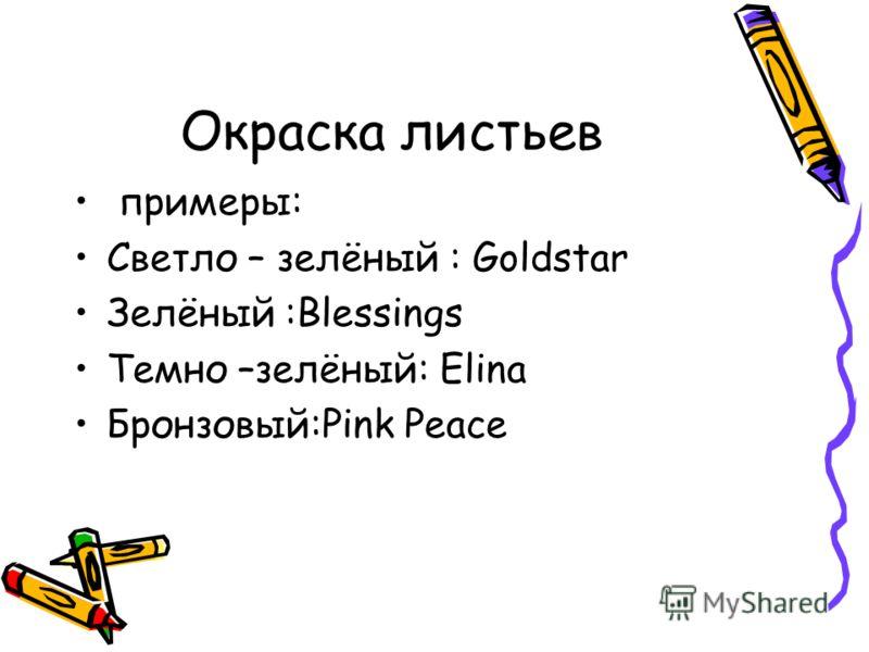 Окраска листьев примеры: Светло – зелёный : Goldstar Зелёный :Blessings Темно –зелёный: Elina Бронзовый:Pink Peace