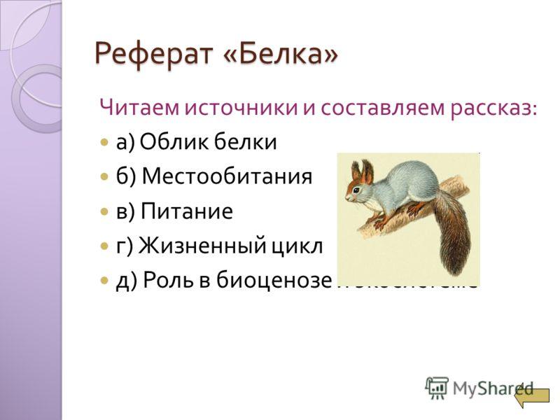 Читаем источники и составляем рассказ : а ) Облик белки б ) Местообитания в ) Питание г ) Жизненный цикл д ) Роль в биоценозе и экосистеме Реферат « Белка »