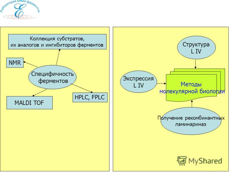 Специфичность ферментов MALDI TOF HPLC, FPLC NMR Структура L IV Методы молекулярной биологии Экспрессия L IV Получение рекомбинантных ламинариназ Коллекция субстратов, их аналогов и ингибиторов ферментов