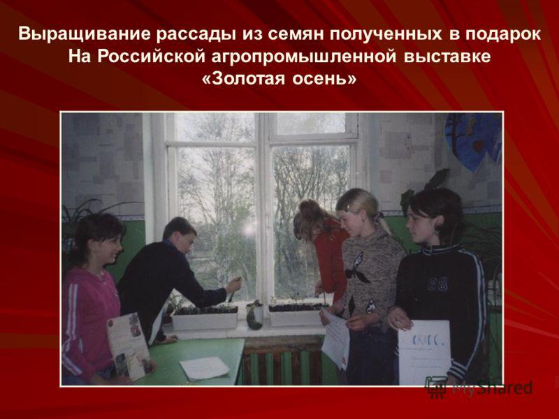 Выращивание рассады из семян полученных в подарок На Российской агропромышленной выставке «Золотая осень»