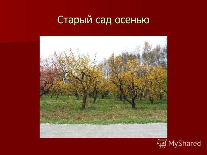 Старый сад осенью