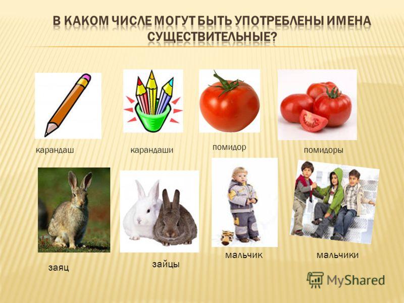 карандашкарандаши помидор помидоры заяц зайцы мальчикмальчики