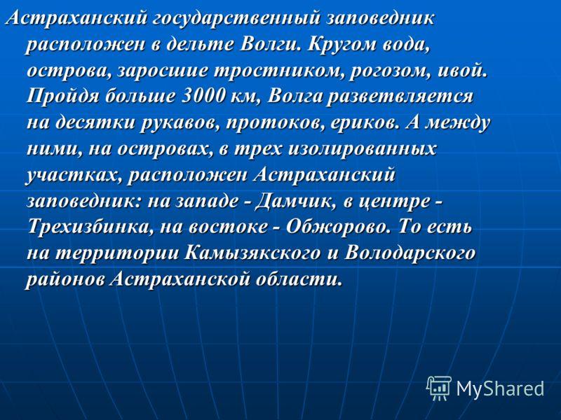 Астраханский государственный заповедник расположен в дельте Волги. Кругом вода, острова, заросшие тростником, рогозом, ивой. Пройдя больше 3000 км, Волга разветвляется на десятки рукавов, протоков, ериков. А между ними, на островах, в трех изолирован