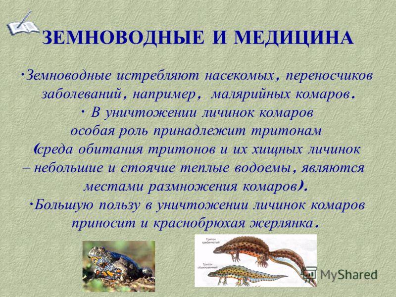 ЗЕМНОВОДНЫЕ И МЕДИЦИНА Земноводные истребляют насекомых, переносчиков заболеваний, например, малярийных комаров. В уничтожении личинок комаров особая роль принадлежит тритонам ( среда обитания тритонов и их хищных личинок – небольшие и стоячие теплые