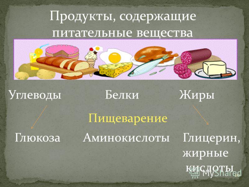 10 Продукты, содержащие питательные вещества Углеводы Белки Жиры ГлюкозаАминокислотыГлицерин, жирные кислоты Пищеварение