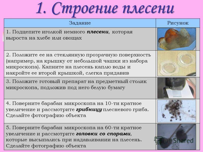 1. Строение плесени ЗаданиеРисунок 1. Подцепите иголкой немного плесени, которая выроста на хлебе или овощах 2. Положите ее на стеклянную прозрачную поверхность (например, на крышку от небольшой чашки из набора микроскопа). Капните на плесень каплю в